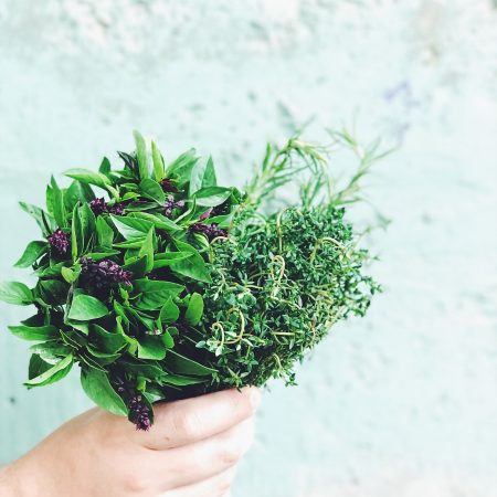 shot of Herbs in hand against wall