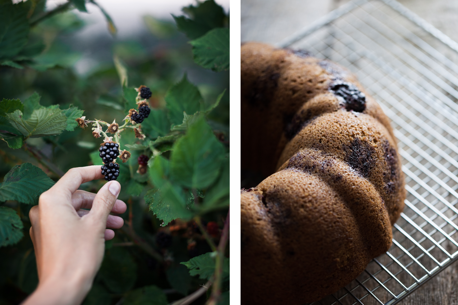a hand reaching for blackberries on a vine and a side view of a blackberry bundt cake