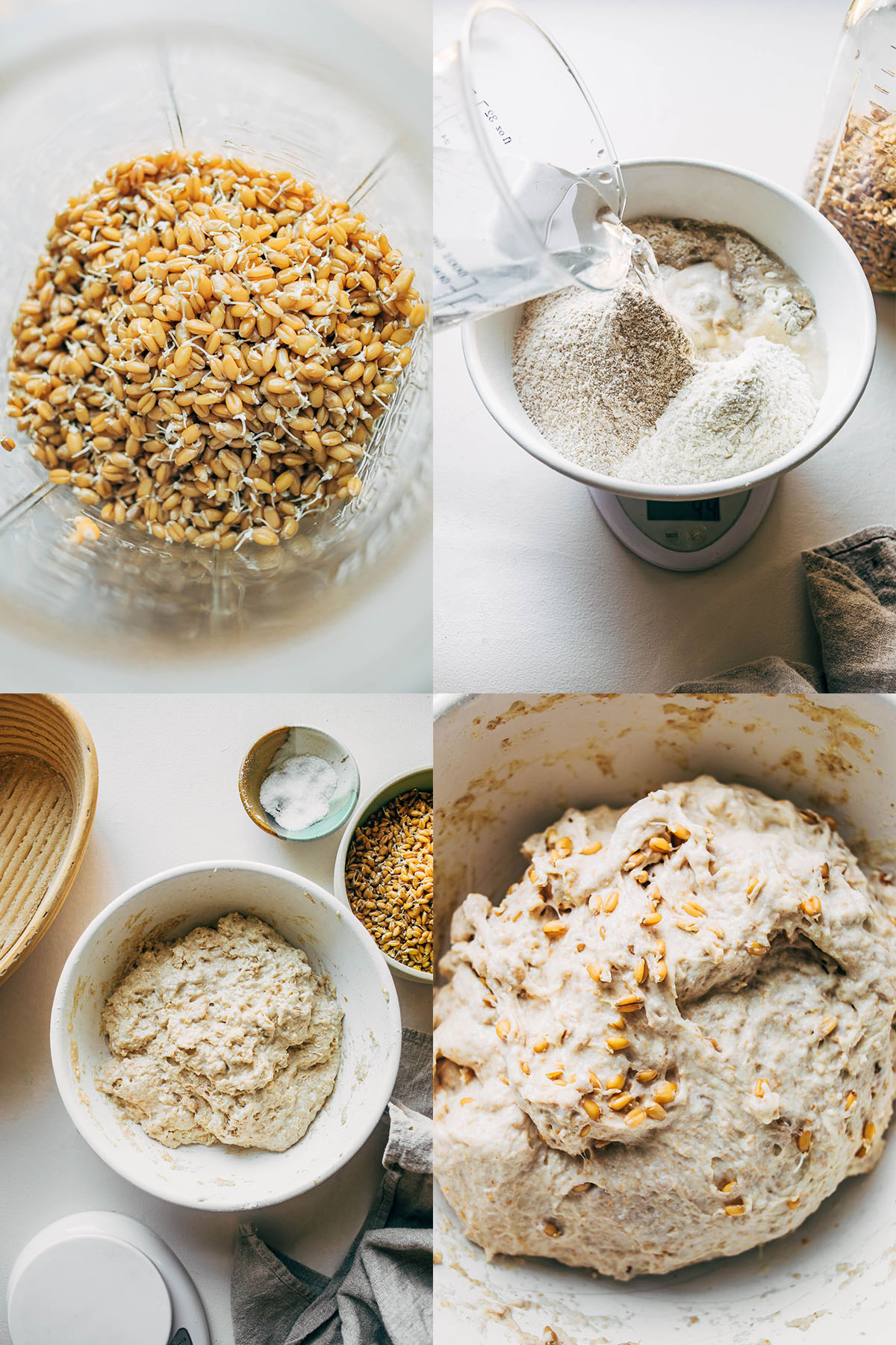 Four images, clockwise from top left: sprouted grains in a container, water being poured into the dry bread ingredients, dough with sprouted grains folded in, and a shaggy dough just after mixing.