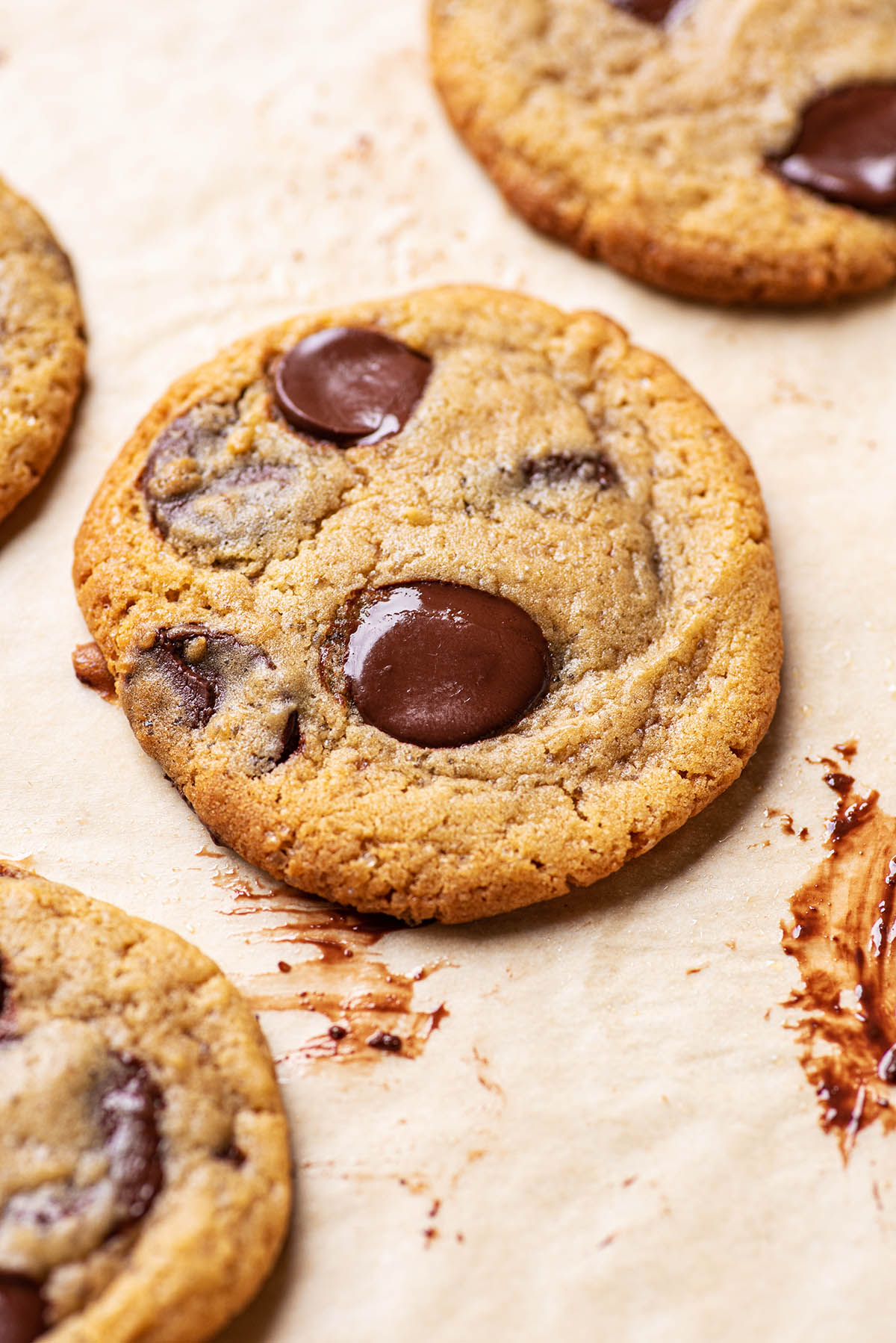 Close up of a chocolate chip cookie.